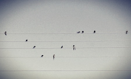 Bird song, foto de Ozan Hatipoglu (Flickr).