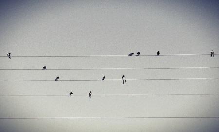 Bird song, foto de Ozan Hatipoglu (Flickr).